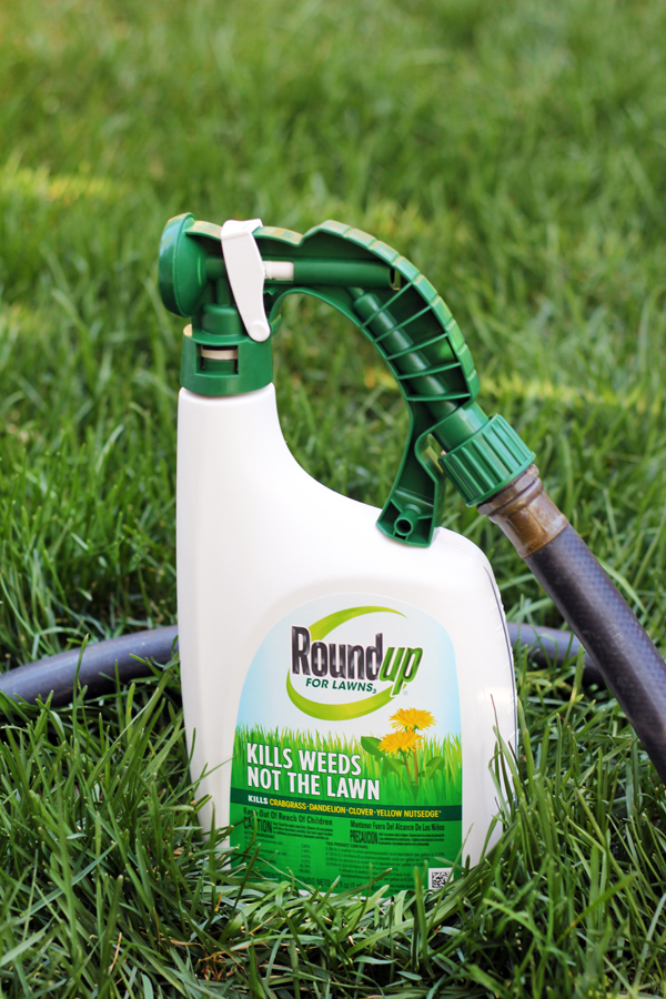 Roundup for Lawns kill the weeds not the lawn